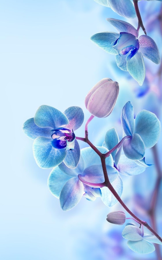 3D Orchid Wallpaper iPhone X