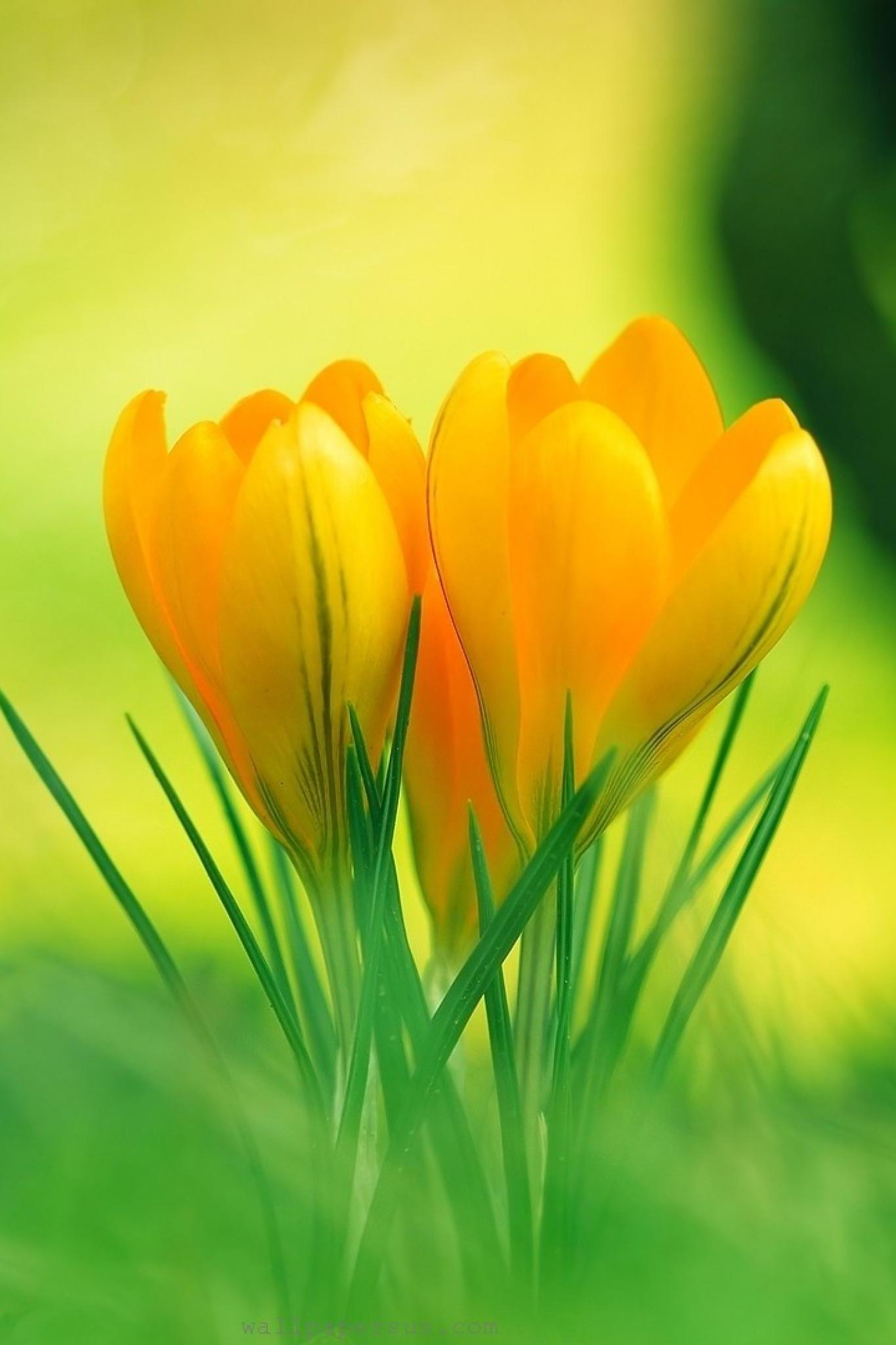 HD Wallpaper Yellow Flower
