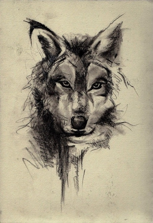 Wolf Face Sketch Art Wallpaper