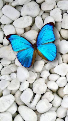Blue Butterfly Wallpaper For iPhone with HD Resolution 1080X1920
