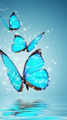 Wallpaper Blue Butterfly iPhone with HD Resolution 1080X1920